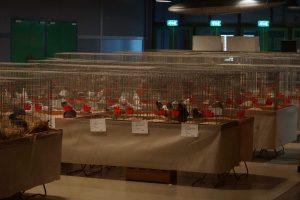 Vrije verkoopklasse dieren bekend