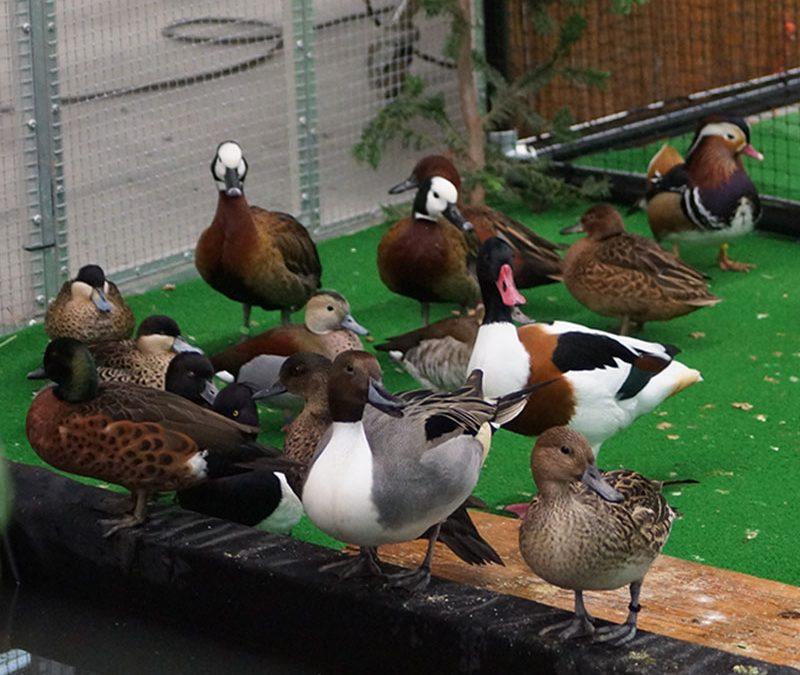 Beste Sier- & Watervogelfokkers